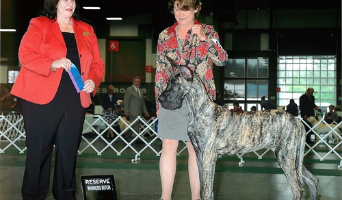 Tacoma Kennel Club 2014