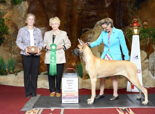 Ryan takes reserver puppy at 2014 GDCA futurity