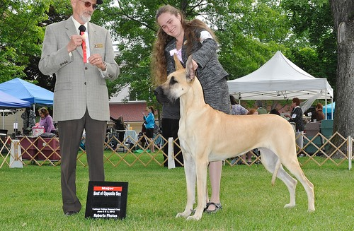 Nala gets another major towards her GCh taking BOS under Waren Hudson
