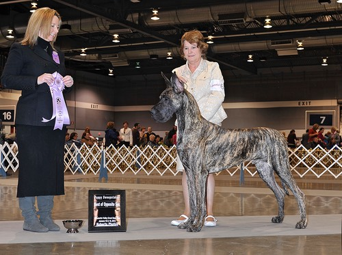 Kovu goes BOS in sweeps at 16 months at WVGDC (he was not shown for many months due to an injury)