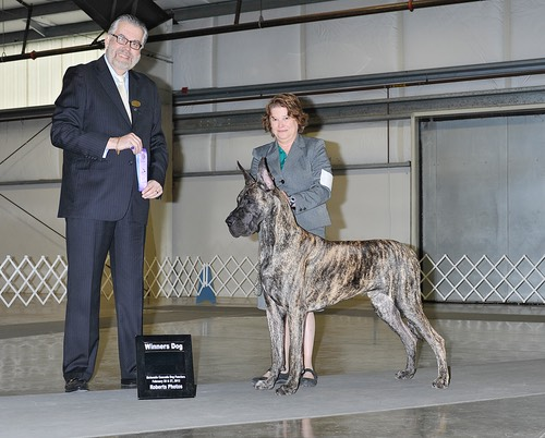 Kovu taking WD in Albany (and yes, the judge is rather tall)