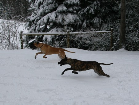 The best part of being a dog - Captain and Jasmine playing in the snow.