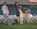 Nala owner handler group 1